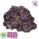 Real Reef Rock - XLarge/Show 4th Generation 1Kg