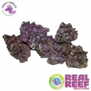 Real Reef Rock 4th Generation Mixed 1Kg