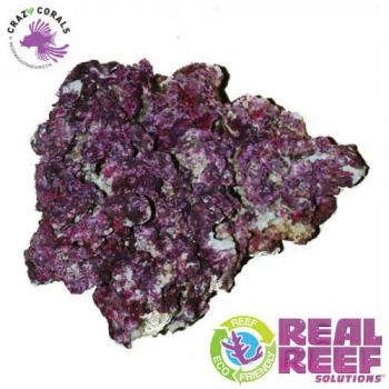 Crazy Corals Ch Real Reef Rock Shelf Rock Box 4th Gen